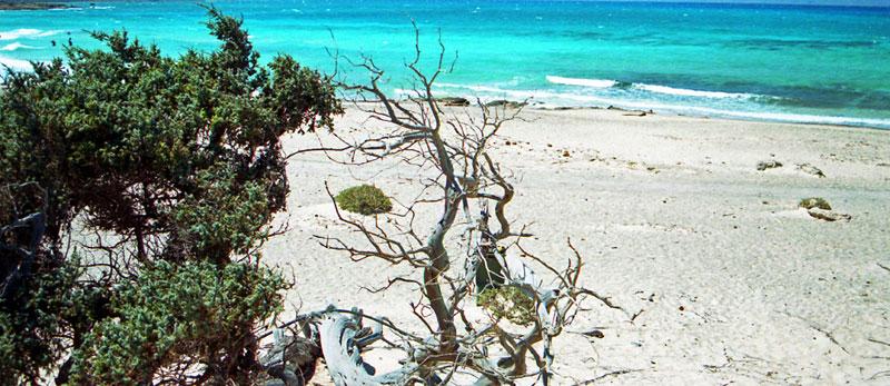 Chrissi Island Cruise in East Crete