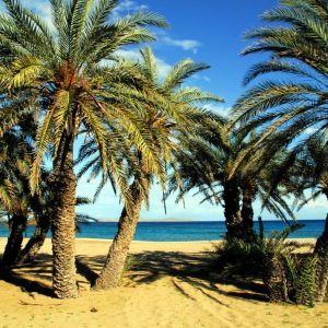 Vai Palm Beach in East Crete