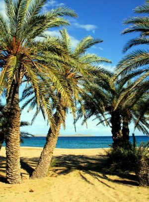 Vai Palm Beach in East Crete