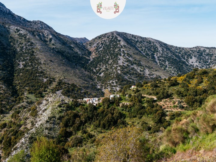 Hunting truffles with dog in East Crete