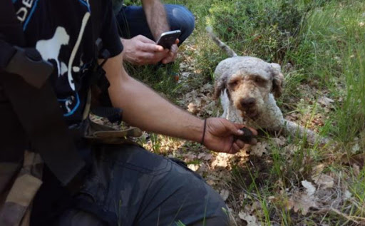 Hunting truffles with dogs in East Crete